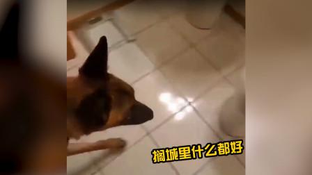 这是谁家的狗子,蹲马桶的动作那叫一个娴熟!