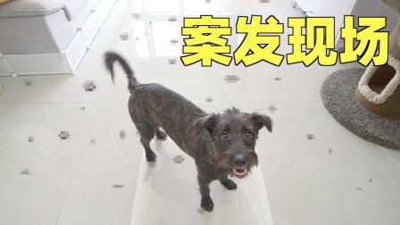 养狗第三天,拉的满客厅都是粑粑,气得把狗直接送走