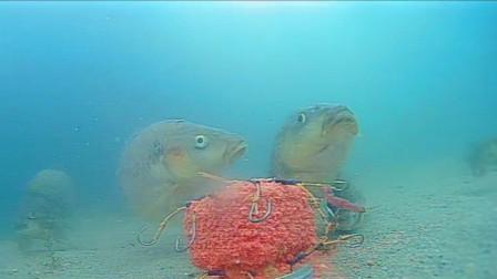水库野钓,坐着开小差,接着发生意外的一幕,水下镜头全程记录