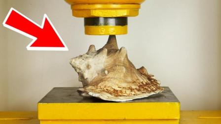 巨型海壳能扛住液压机的挤压吗?老外实测,结果太意外!