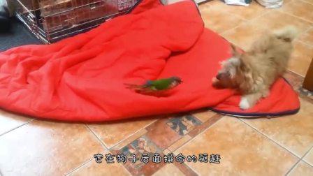鹦鹉和土拨鼠第一次见面,不料竟然打了起来,镜头记录搞笑画面