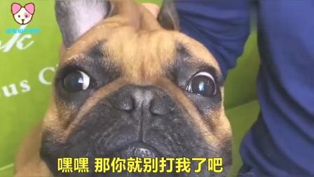 主人忘了亲嘴的感觉,狗狗:亲嘴前要消毒