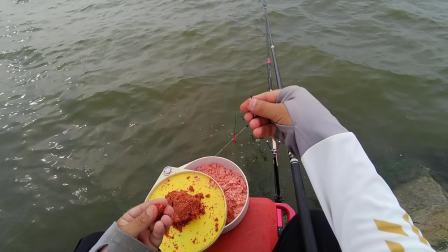 这个钓点,鱼种丰富各种惊喜,关键还免费,这种钓点哪个不羡慕