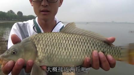 农村小伙采用追星钓法,不打窝还能中大鱼,这技术也来牛了