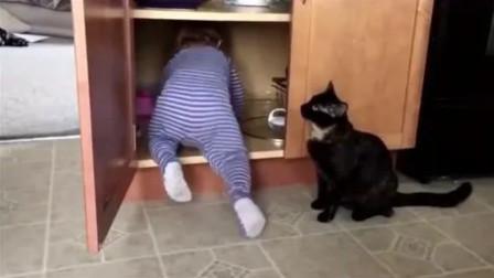 宝宝突然爬进柜橱里,调皮猫咪立马把宝宝关柜子里了,这猫太坏了
