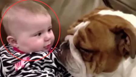 小宝宝被狗狗狂舔脸,立马转头瞪着狗狗,指着狗狗仿佛在说:你够了