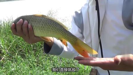 农村小伙在水深只有半米深的草头垂钓,本不报希望,没想到还有意外惊喜
