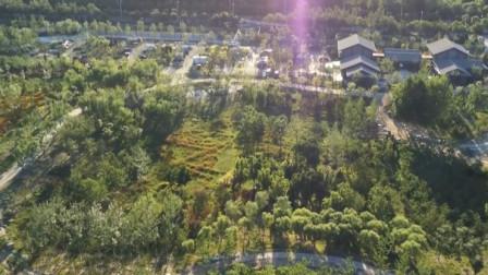 城市绿心森林公园开园啦!又添一处遛弯胜地