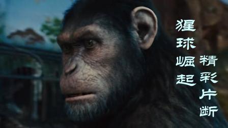 猩球大战科幻片,人类改变猴子基因,猴子长大成为猴帝王