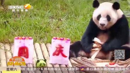 """南宁动物园里看国宝庆国庆!大熊猫的月饼很有""""料"""" 都市快报"""