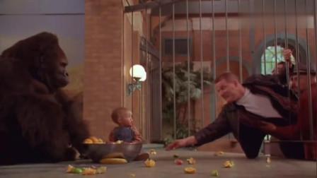 人贩子要劫持小宝宝,看大猩猩如何在线护娃