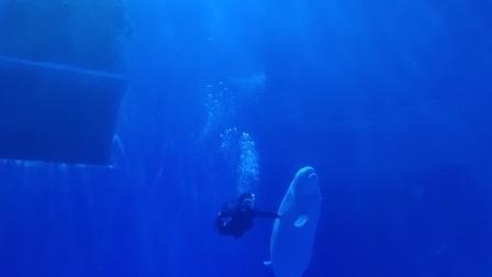 赣州海洋公园人鱼共舞