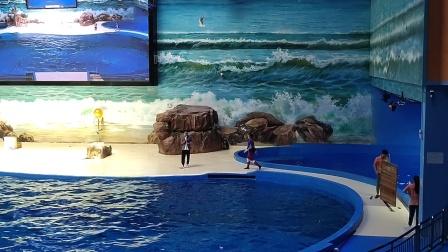 赣州海洋公园白鲸表演