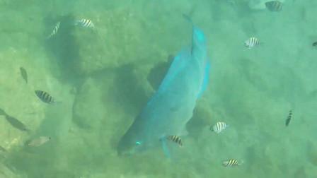 岸边发现一条大鱼,还带着一班小弟!