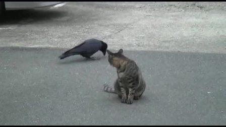 嘴贱乌鸦招惹猫咪,千万忍住别笑,神反转