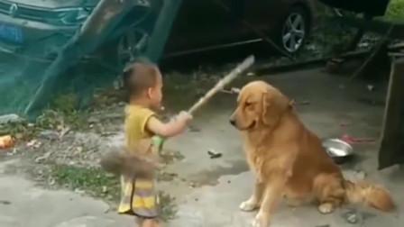 金毛:幸好这小子打不准,不然这狗头不保啊