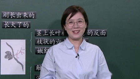 上海市中小学网络教学课程 四年级 语文:爬山虎的脚(三)