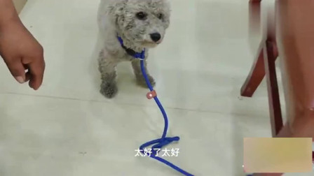 农村狗市:小奶狗不想离开狗妈妈,在抱找领养的时候突然抽搐,到底怎么回事