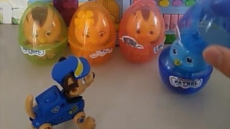 萌鸡小队睡在汪汪队的彩蛋里面,他们的在鸡妈妈那里!