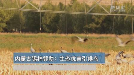 世界那么大丨内蒙古锡林郭勒: 生态优美引候鸟