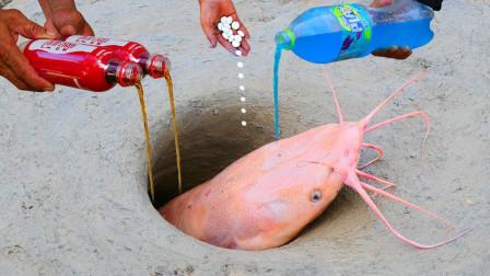 小伙野外发现神秘洞穴,往里猛灌大瓶可乐,竟钻出变异物种