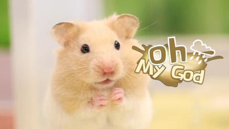 养仓鼠是种什么样的体验呢?