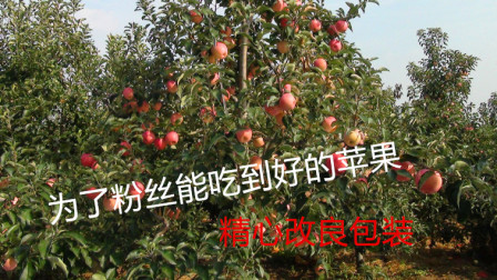 农村大锅哥,为了粉丝能吃到好的苹果,精心改良水果包装
