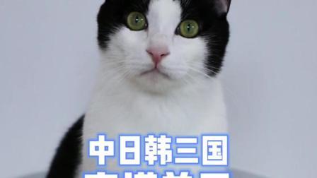 你们最喜欢哪只猫咪的穿搭风格呀~