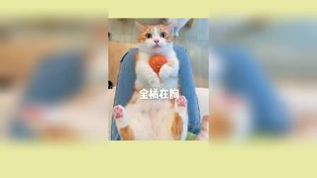 当一只橘猫碰到一颗橘子时......