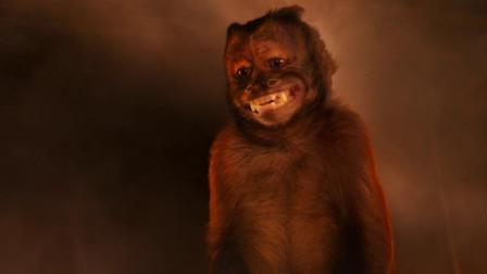 博物馆:猴子的一泡尿,居然救了整个城市,不可思议!