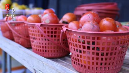 四明山的柿子红了,满枝的柿子吊红,妆点出柿林村如诗如画