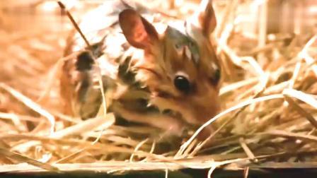 你见过听得懂人话的小老鼠吗 #拯救小鼠拉菲