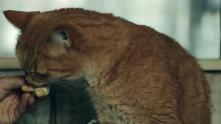 流浪猫鲍:小鲍勃真是太粘人啦,总是跟着鲍恩,真是个粘人的小妖精