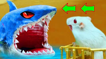 小仓鼠不慎误入大白鲨巢穴,周围机关密布,惊险上演鲨口逃生!