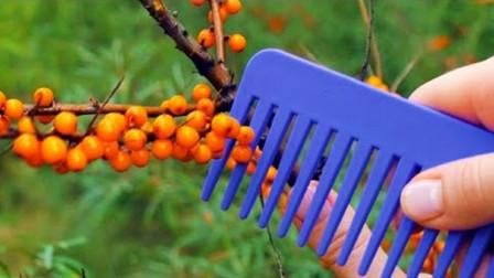 园林采摘技术小窍门