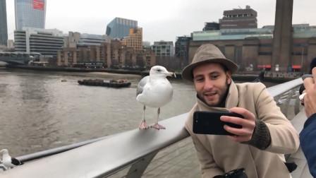 海鸥叼走男子的手机,飞了一圈又回到原位,手机记录罕见画面