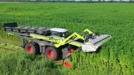 在农田中高速作业的先进的农业机械收割艾草