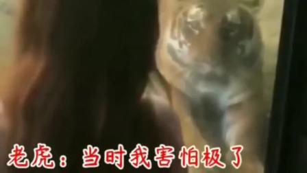 老虎:她一回头我感受到了血脉压制