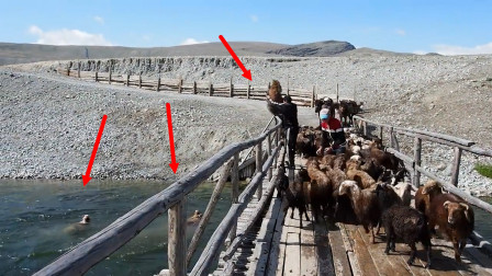 """蒙古式洗羊,方式简单粗暴,网友:这就是传说中的""""洗""""羊羊"""