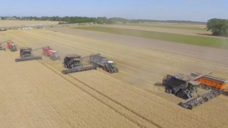 农田中的大型联合收割机组队收割小麦速度快效率高