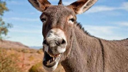 《荒野大镖客2》印度耍蛇人用100条大蟒蛇VS本地毛驴,结果吓得驴子大喊救命!