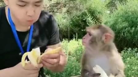 猴子吃香蕉,愉快的小步伐