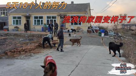 流浪狗的新家园,经过10个人5天的收拾,已经初见雏形了