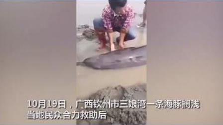 广西钦州市三娘湾一条海豚搁浅,当地民众合力救助后,这条海豚却迟迟不肯游回大海深处…