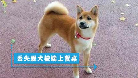 青岛男子柴犬丢了,找到时已被端上饭桌,捡狗大爷一句话气死人