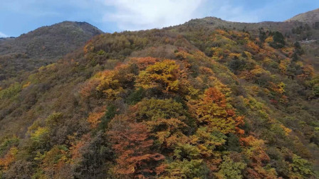 航拍!湖北神农架林区迎来秋景最佳观赏期,漫山秋叶宛如油画