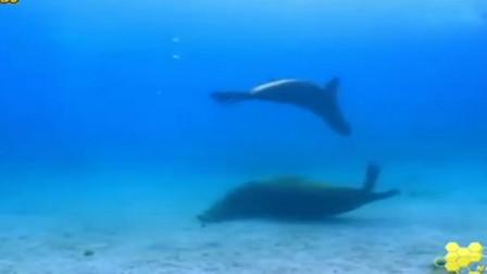 """欢乐的海底世界:水底的""""杂技演员""""展示技艺,对潜水者表示欢迎"""