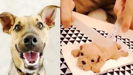 狗对切狗蛋糕的各种有趣反应汇编