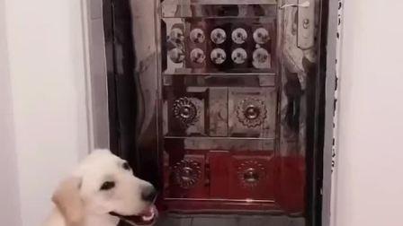 主人出门忘记带钥匙!