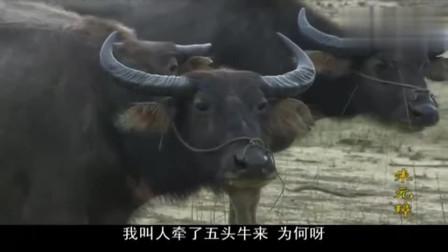 朱元璋:胡惟庸有仇必报,在杨宪这兑现了!